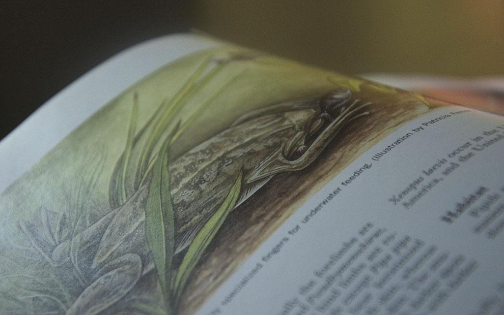 textbook illustration 05