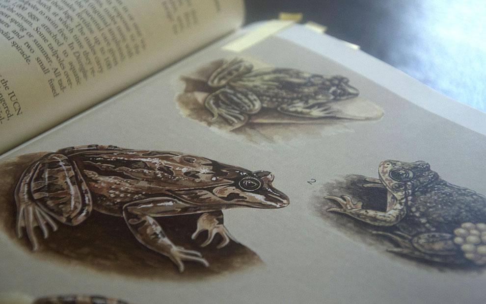 textbook illustration 02