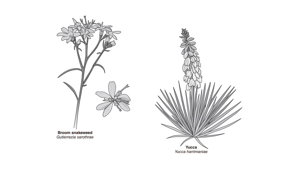 botanical illustration 05
