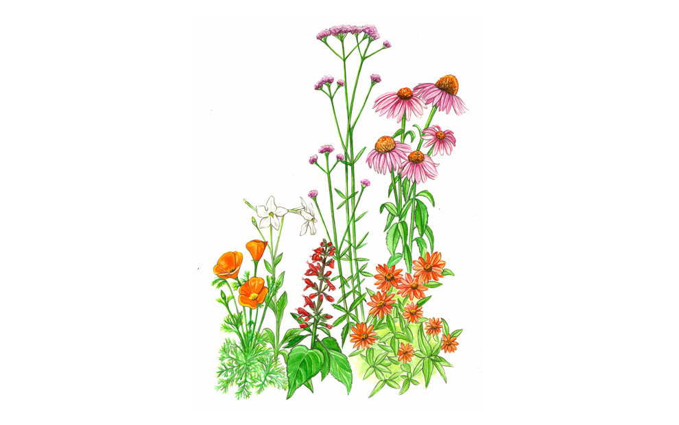 wild flower illustration