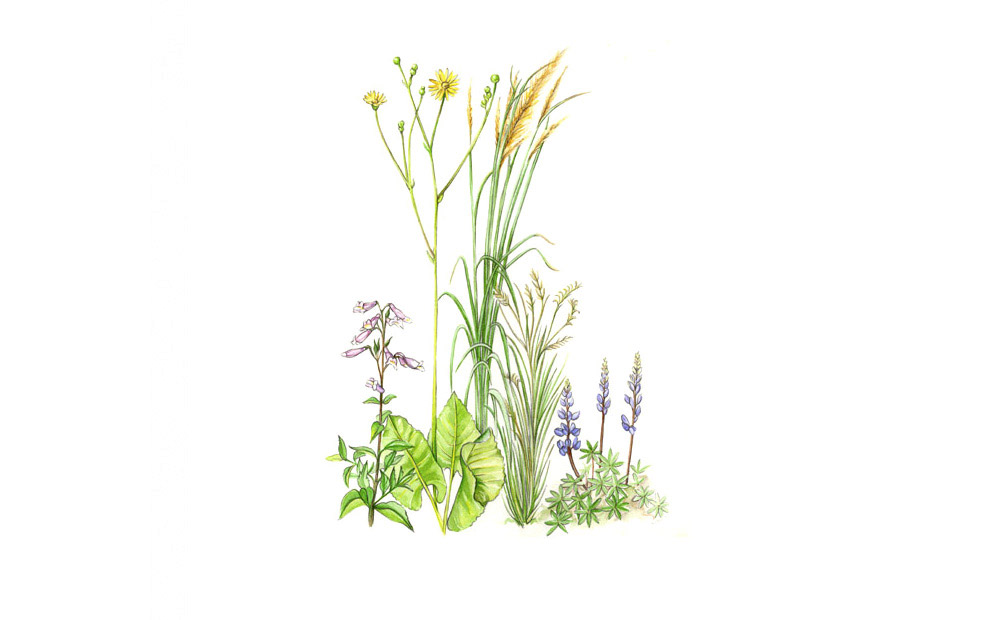 wildflowers illustration