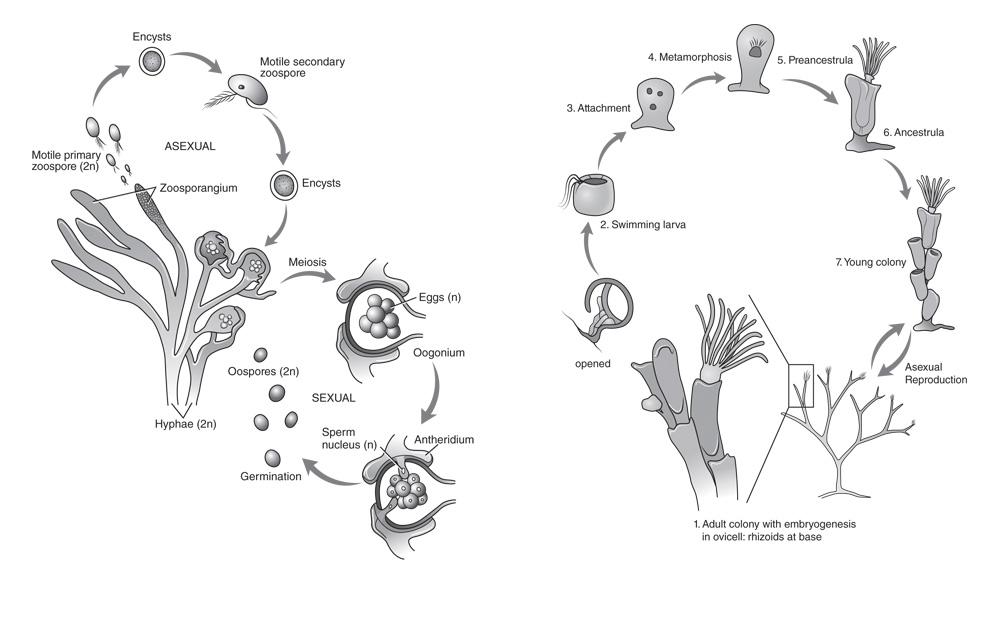lifecycle illustration