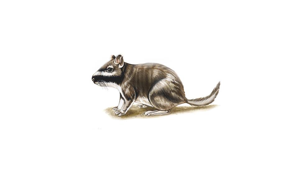 wildlife illustrator 2