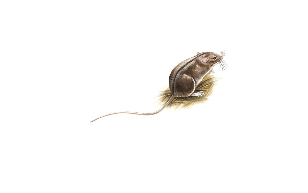 wildlife illustration 03