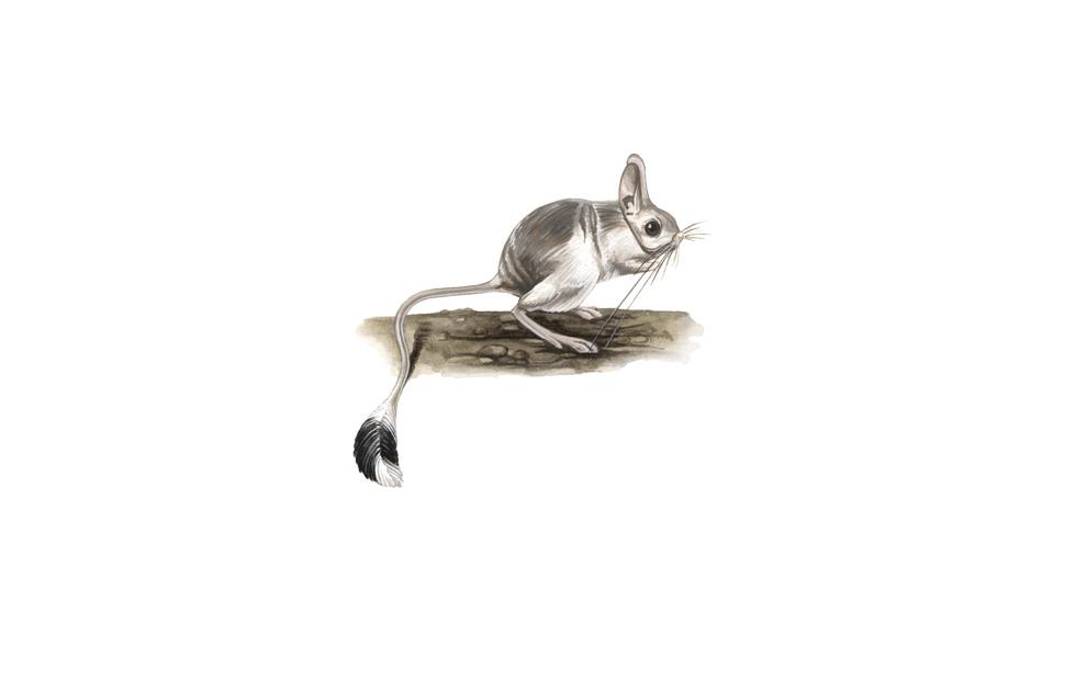 wildlife illustration 02