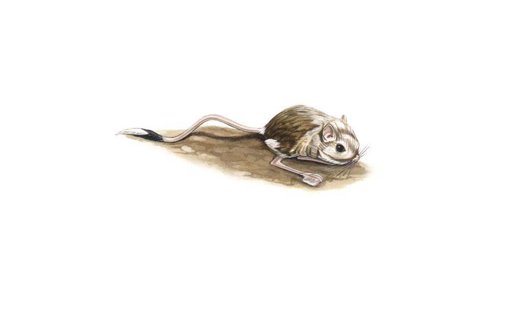 wildlife illustration 01