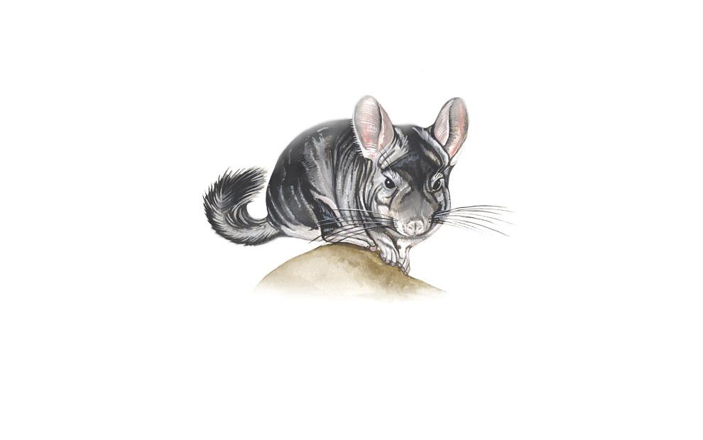 wildlife illustrator