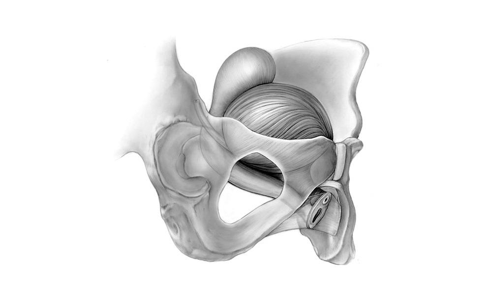 bladder illustration